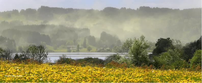 pollencloudoverflowerfield